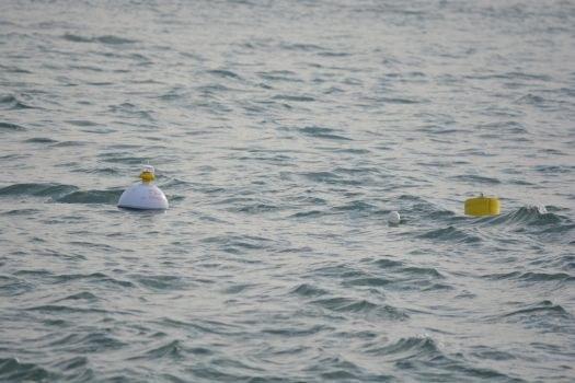 Boa ondametrica a largo della foce del Bevano